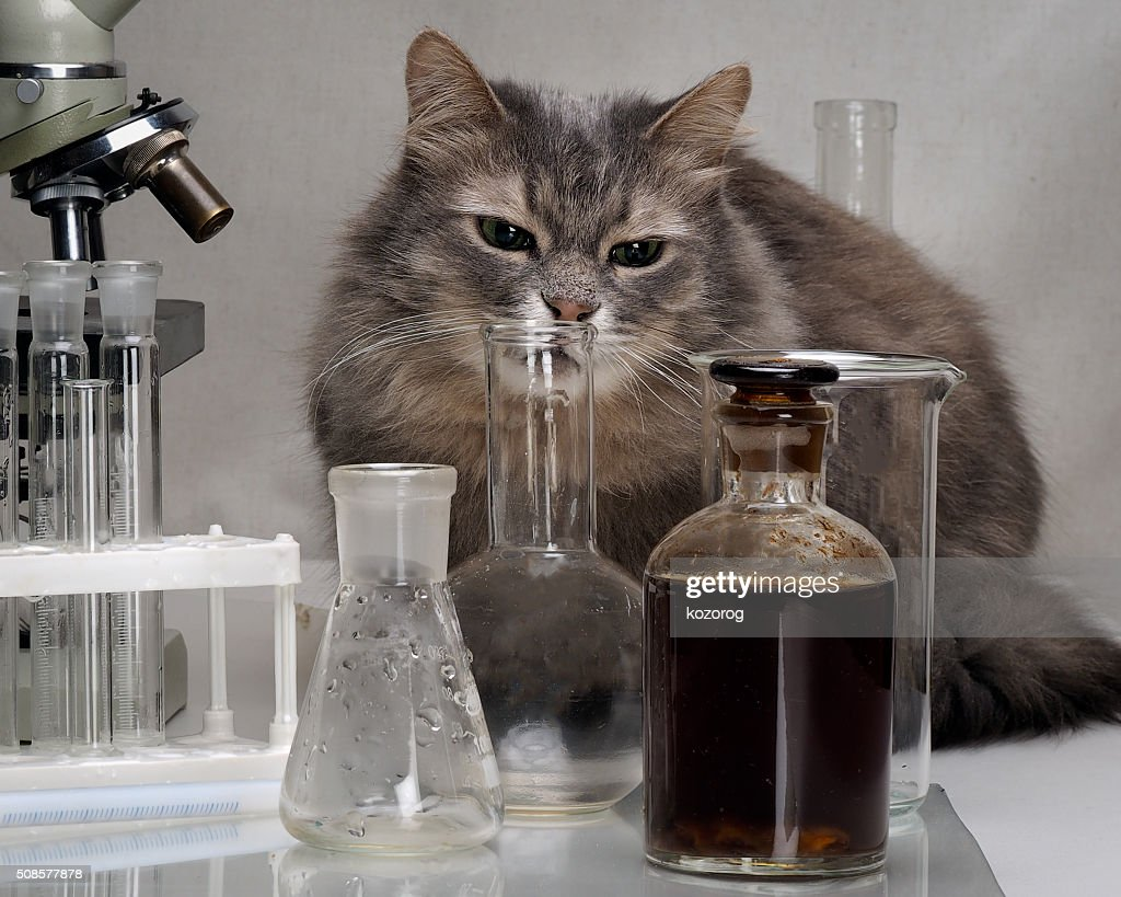 Cat in the chemical laboratory : Stock Photo
