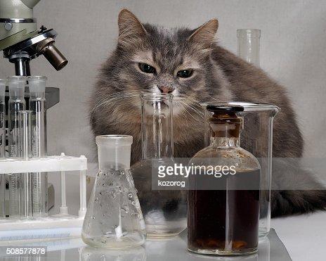 Chat dans le laboratoire de chimie : Photo
