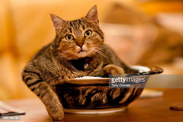 A Cat in the fruit bowl