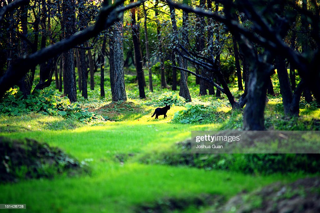 Cat in tiny forest : Stock Photo