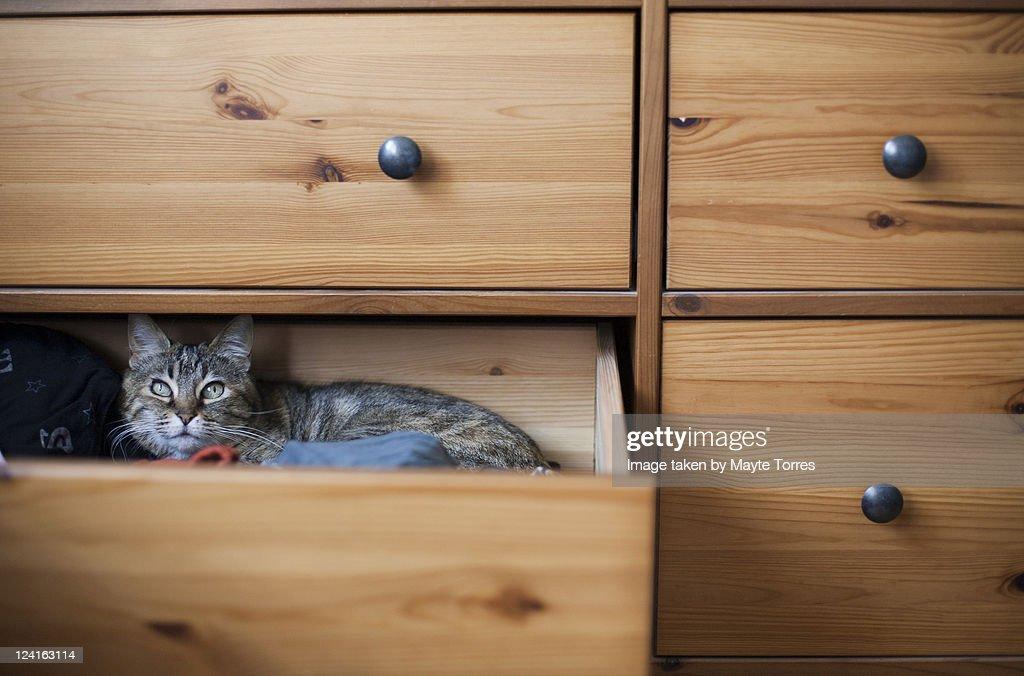 Cat inside drawer : Stock Photo