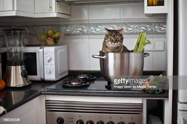 Cat inside kitchen pot