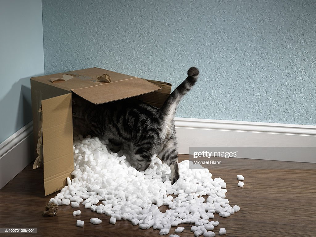 Cat inside removal box : Stock Photo