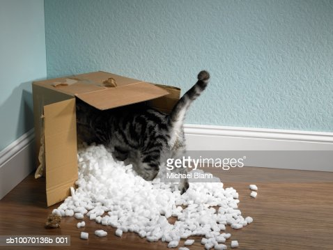 Cat inside removal box : Foto stock