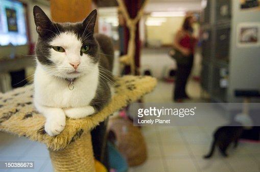 Cat inside the Poezenboat Cat Boat in the Nine Straatjes in the Southern Canal Belt.