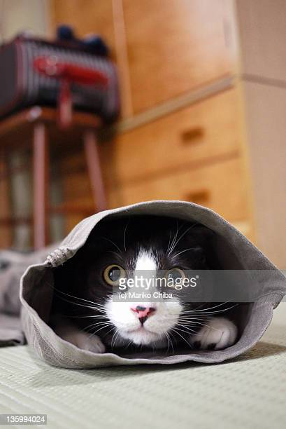 Cat inside trouser