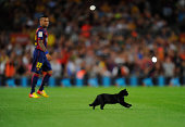 A cat invades the pitch at the start of the La Liga match between FC Barcelona and Elche FC at Camp Nou stadium on August 24 2014 in Barcelona Spain