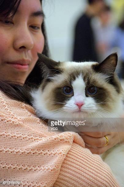 Cfa Cat Shows Uk