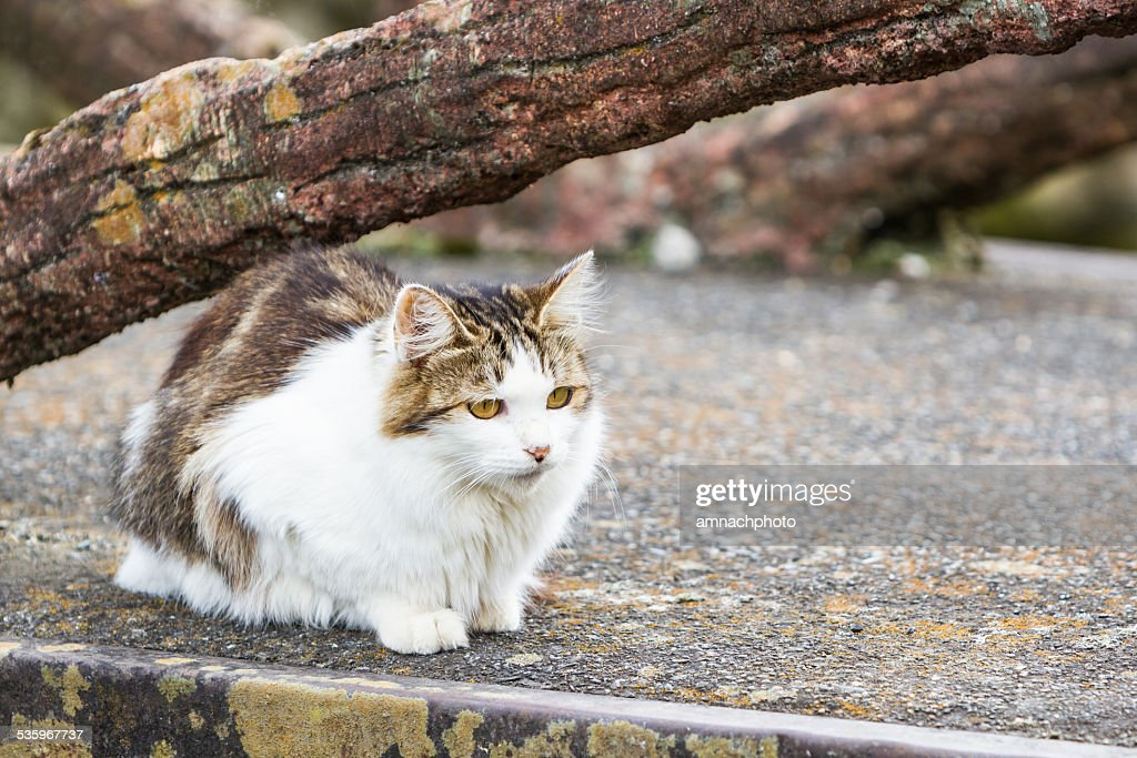 Cat is resting under the tree on ground. : Stock Photo