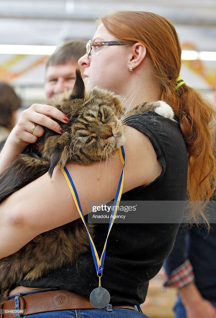 A cat is seen during a costume contest organized within the Cat Show 'Royal Feline' in Kiev, Ukraine May 28, 2016. The exhibition presents rare breed cats like dwarf tiger 'Toyger', the tiniest cat in the world, Singapore's cat, Somali's cat and many others.