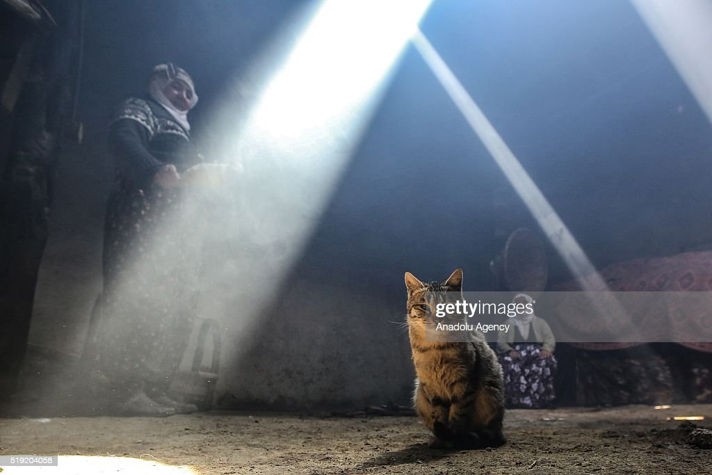 A cat is seen in a village kitchen as women cook in traditional tandoor which is a cylindrical clay or metal oven used in cooking and baking in...