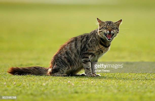 A cat is seen on the pitch during day two of the 1st Test between South Africa and England at Sahara Stadium Kingsmead on December 27 2015 in Durban...