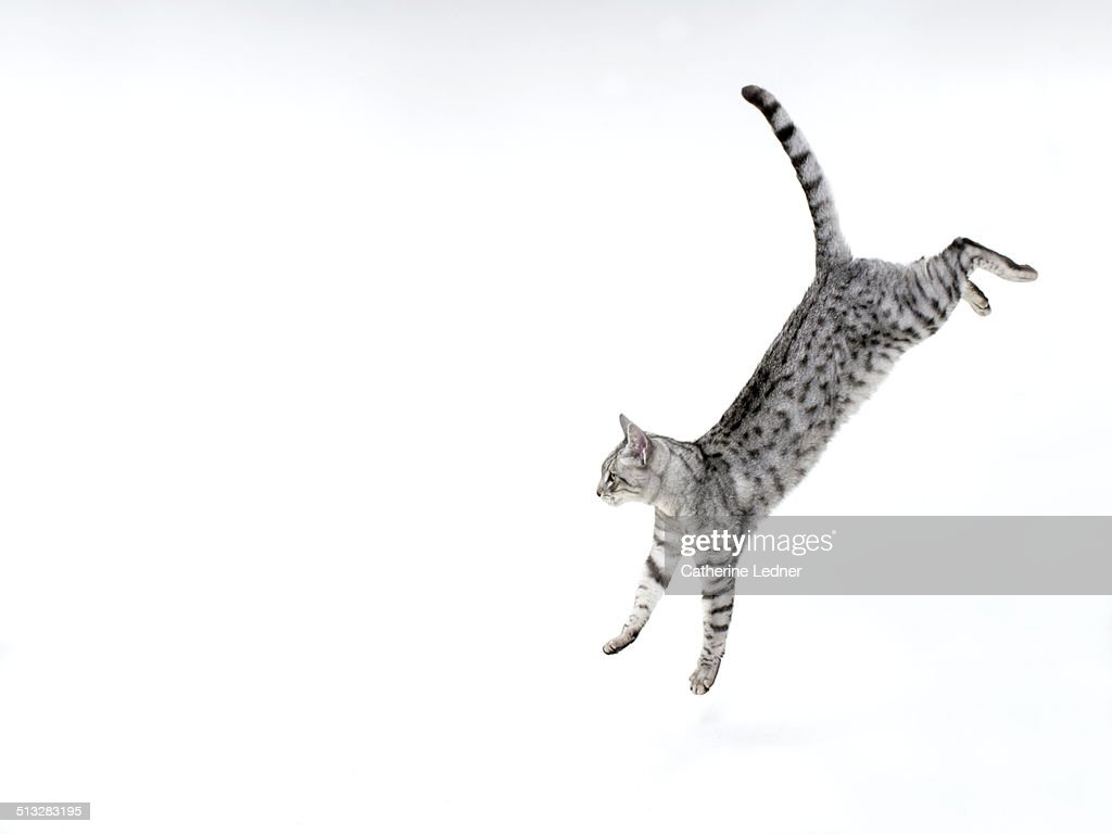 Cat jumping down on white