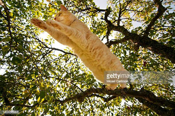 Cat jumping from tree