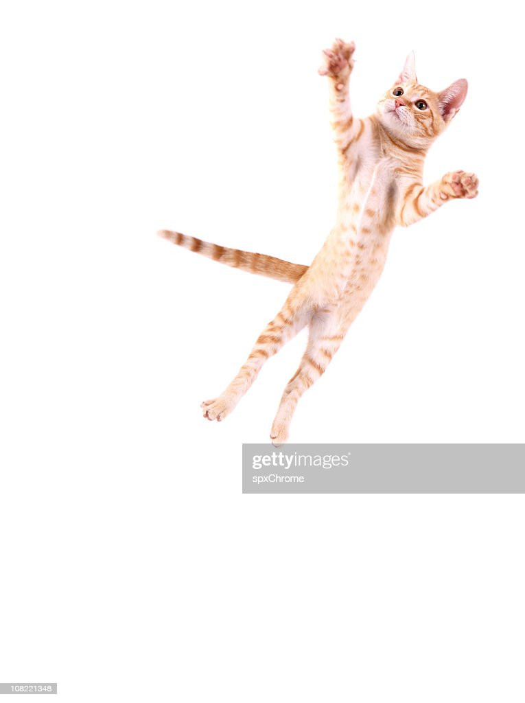 Cat Jumping : Stock Photo