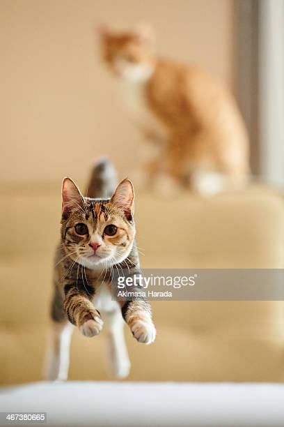 Cat jumping toward camera