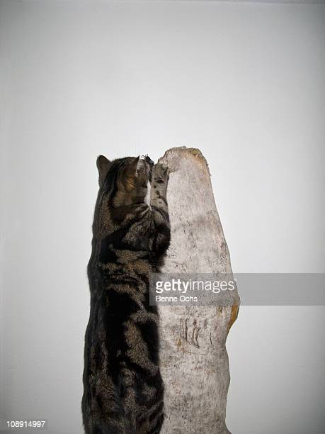 A cat jumping up a piece of wood