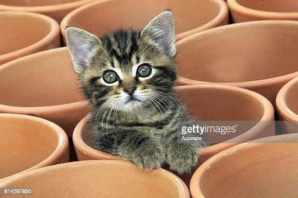 Cat kitten in one of an array of new flower pots