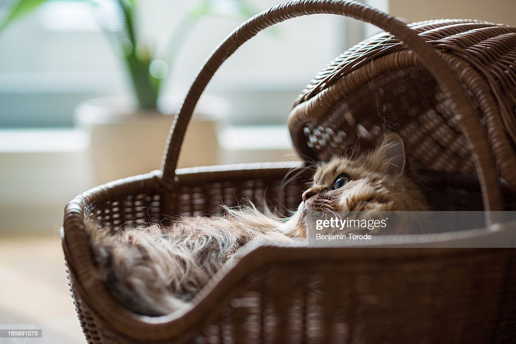 Cat laying in basket : Stock Photo