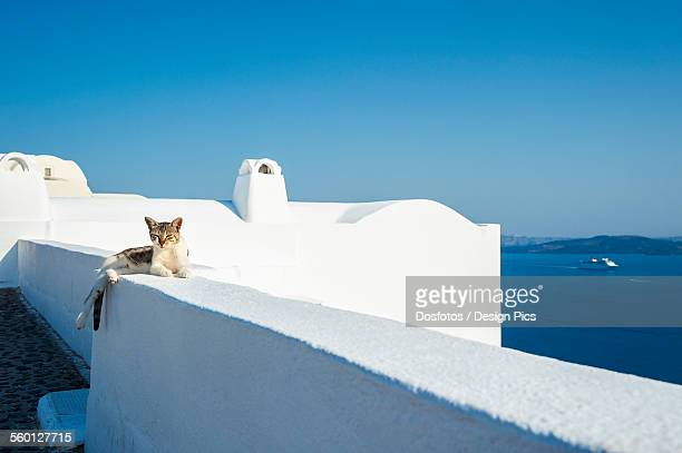 A cat lays on a whitewash wall with a view of the Aegean sea