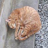 Cat lie curled up.
