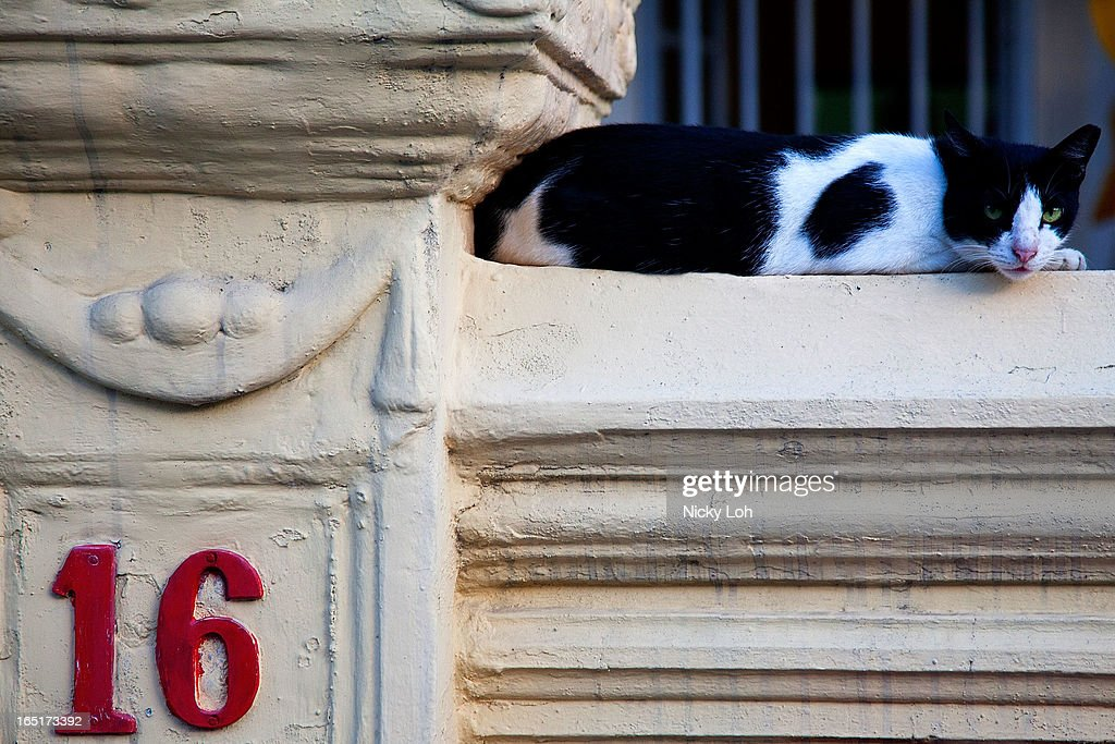 A cat lies on the ledge of a traditional shophouse along Koon Seng Road on April 1, 2013 in Singapore. A shophouse is a vernacular architectural building type that is commonly seen in areas such as urban Southeast Asia. Shophouses are mostly two or three stories high, with a shop on the ground floor for mercantile activity and a residence above the shop. This pre-industrial form of urban units, prevalent in 19th and early 20th century Southeast Asian towns, cities and commercial centres, literally housed everything from work to home. Today, these buildings are recognised for their significance not only as an architectural heritage but more importantly as a reflection of the island's societal history and development.