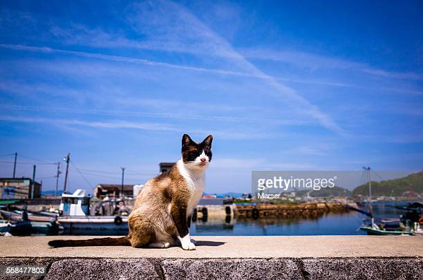 A cat living at the harbor