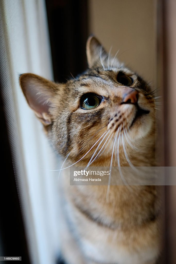 Cat look up : Stock Photo