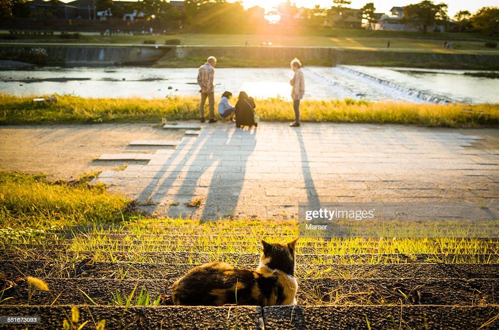 A cat looking at a family