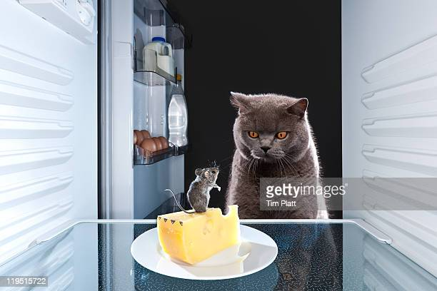 Cat looking at a mouse in a fridge.