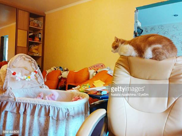 Cat Looking At Baby In Crib While Sitting On Chair Backrest
