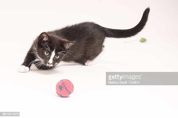Cat Looking At Ball On White Background