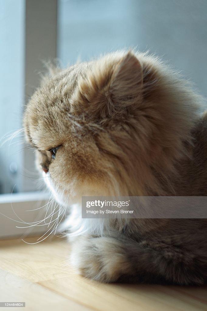 Cat looking at floor : Stock Photo