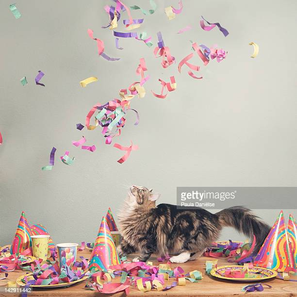 Cat looking at flying confetti