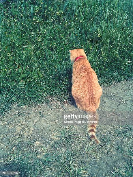 Cat Looking At Grass