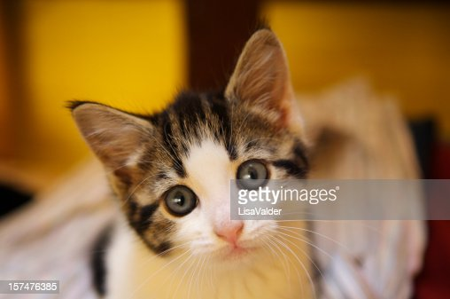 Cat looking at the camera with pleading wide eyes