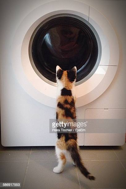 Cat Looking At Washing Machine