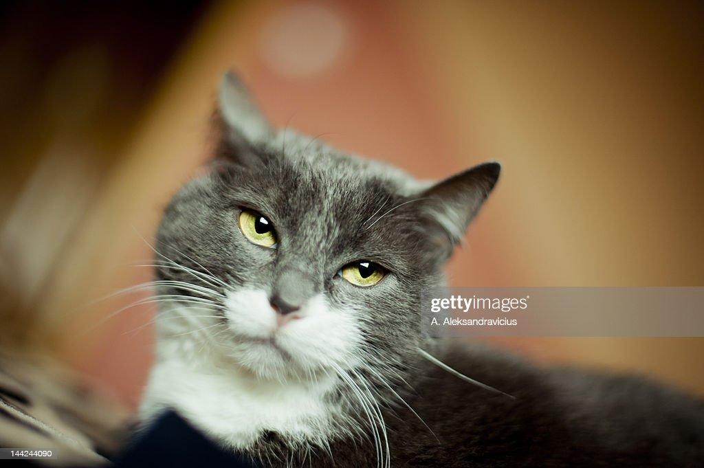 Cat looking away : Stock Photo