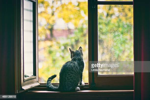 cat looking by a window