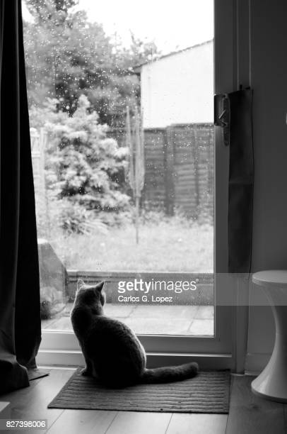 cat looking out at garden