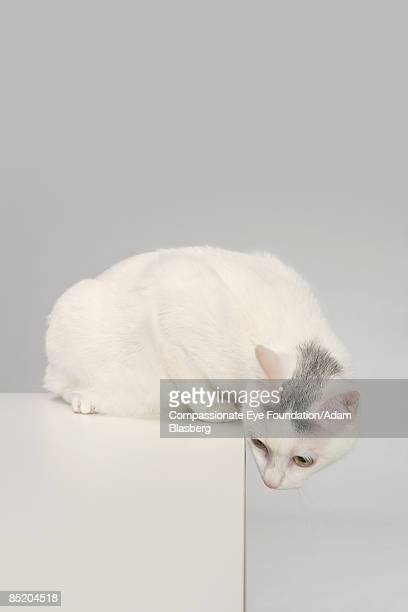 cat looking over an edge