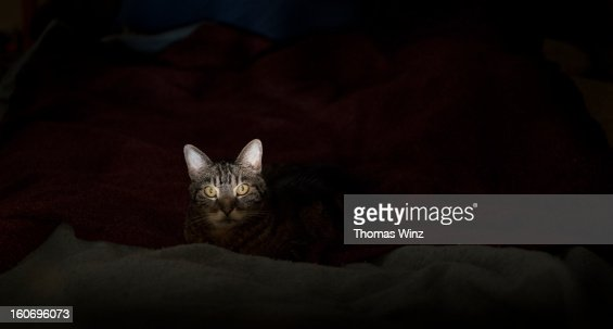 Cat looking : Stock Photo