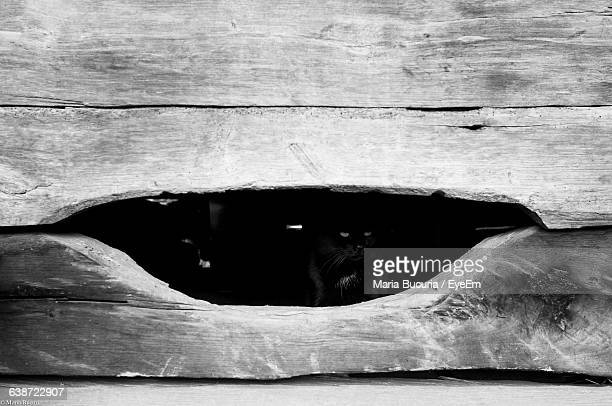 Cat Looking Through Hole In Wooden Fence