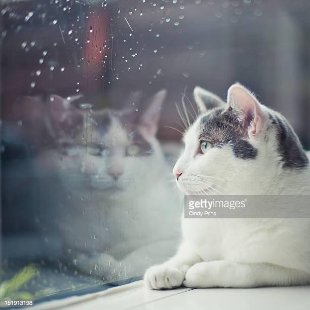 Cat looking through rainy window