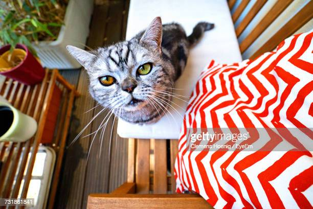 Cat Looking Up By Potted Plant
