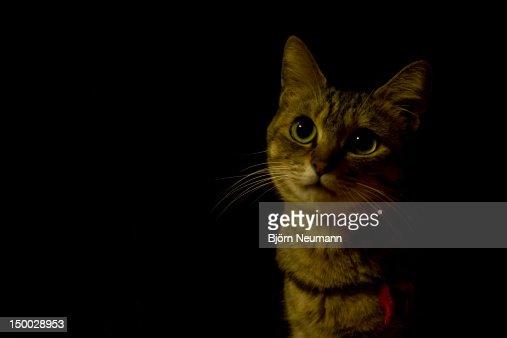 Cat looking up : ストックフォト