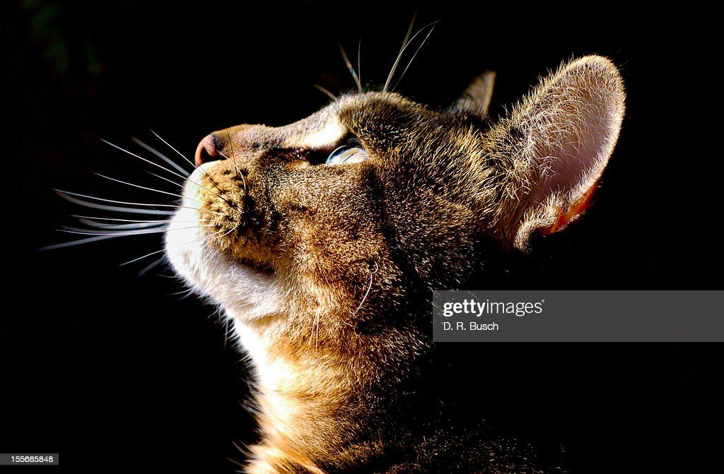 cat looking up : Stock Photo
