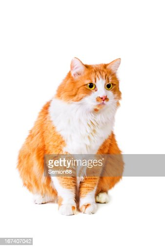 Cat looks with interest : Stock Photo