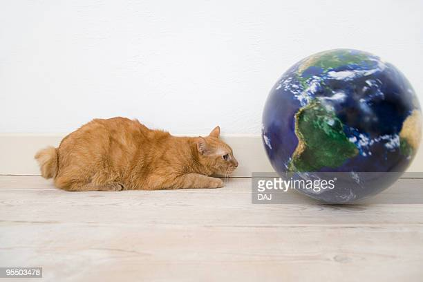 Cat lying beside globe