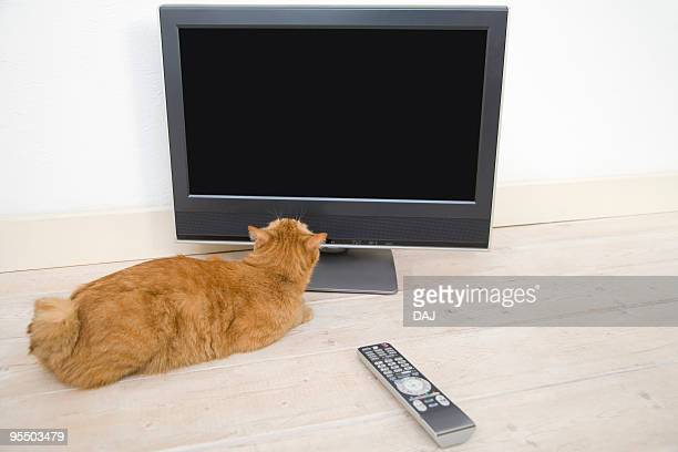 Cat lying beside TV, looking at the monitor